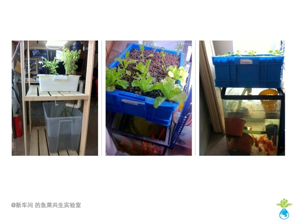 Aquaponics workshop 002