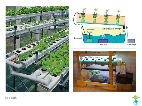Aquaponics workshop 012